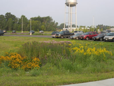 A garden near a parking lot