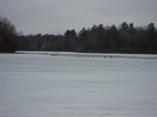 A frozen lake with birds landing on it